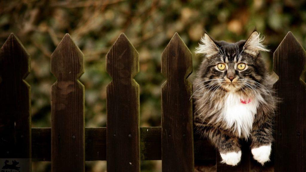 Текущий форекс-план: сижу на заборе